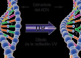 efecto del ultravioleta coronavirus
